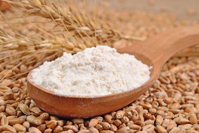 Farinha branca em uma colher de madeira e nas orelhas do trigo em uma grão do trigo foto de stock