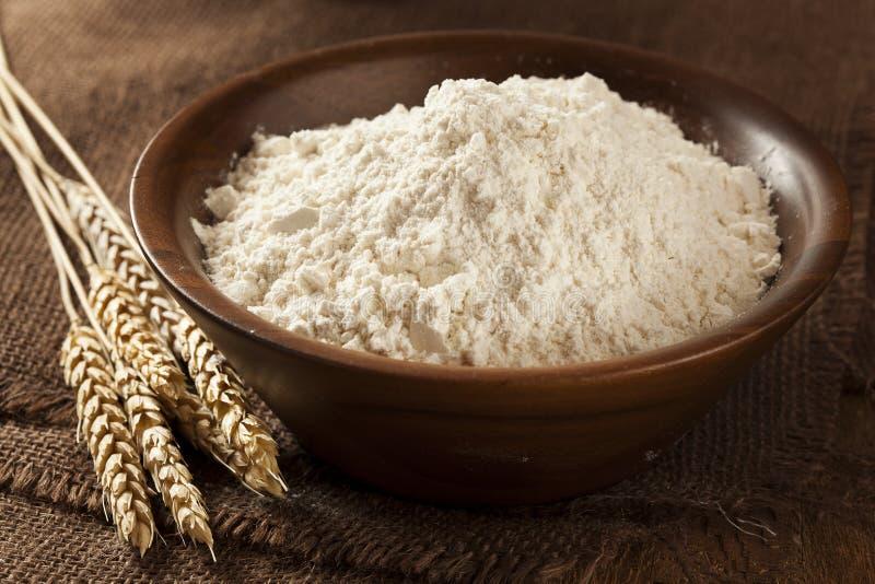 Farinha de trigo inteiro orgânica fotos de stock royalty free