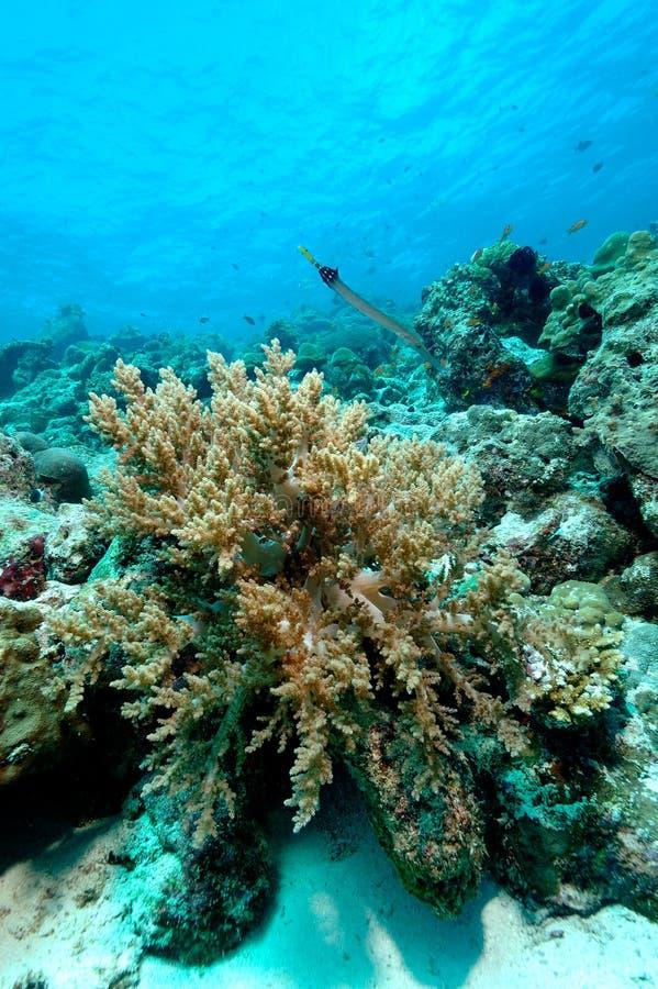 Farligt härlig aceh indonesia dykapparatdykning arkivfoto
