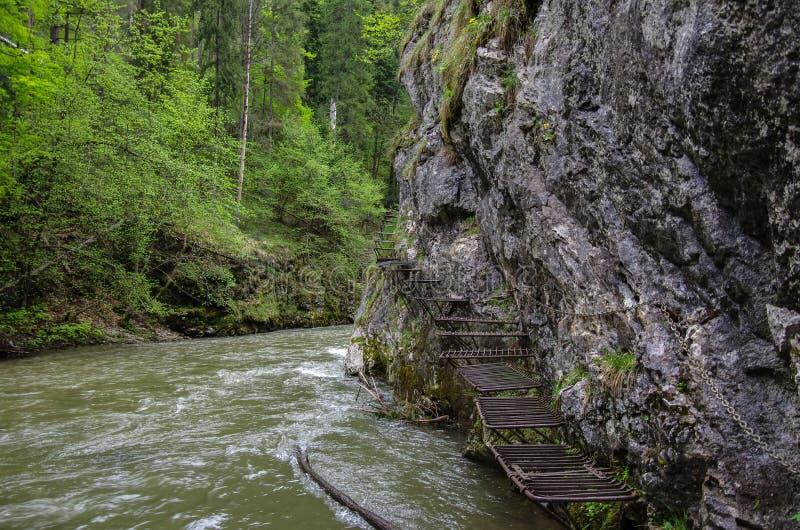 Farligt släpa den Hornad floden (som använder via Ferrata), Slov royaltyfria bilder