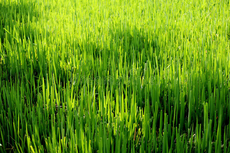 Download Farm stock photo. Image of leaf, healthy, idyllic, land - 28247534