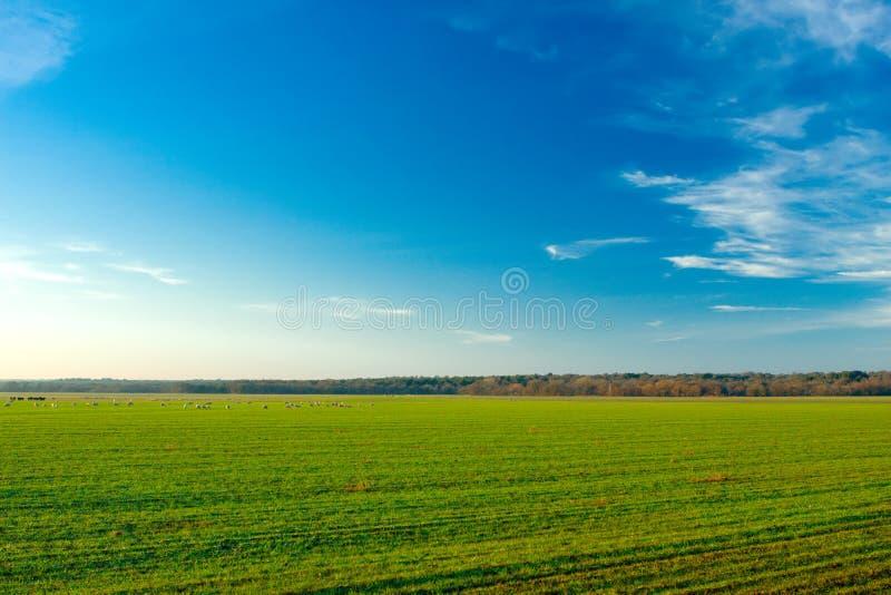 Download Farm stock image. Image of sunrise, landscape, animals - 4003873