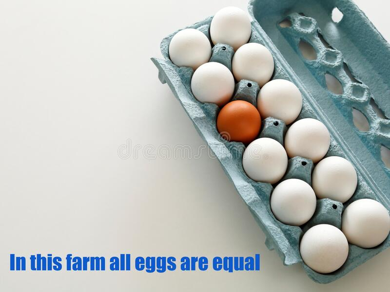In this farm all eggs are equal with text stock photos
