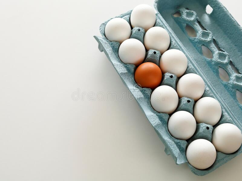 In this farm we are all equal with eggs royalty free stock images
