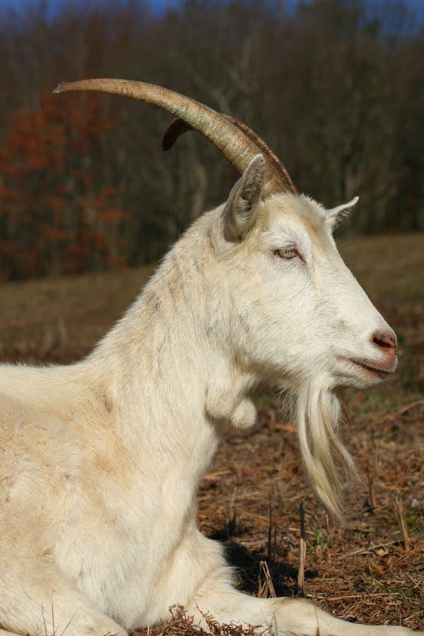 Download Farm animal stock image. Image of environment, antler - 2143927