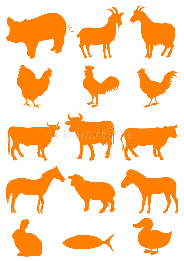 Download Farm animal stock vector. Image of drawing, fish, chicken - 8696344