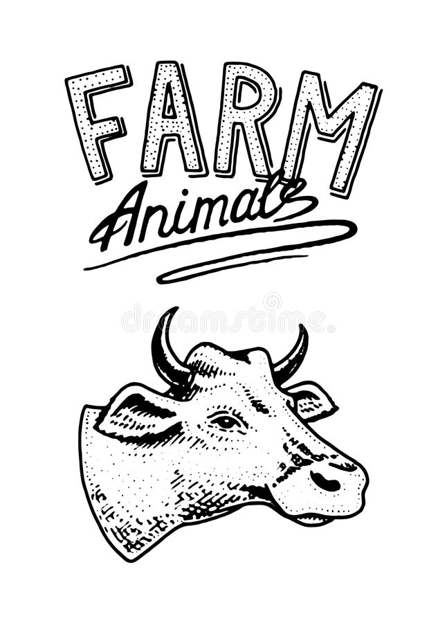 Farm animal. Head of a domestic cow taurus bull. Logo or emblem for signboard. icon for the menu. Label for natural royalty free illustration