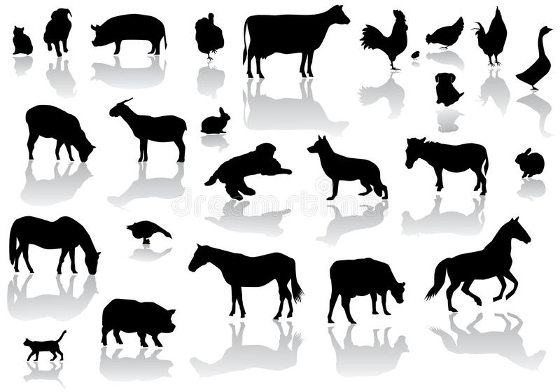 Farm animals. Illustration of farm animals silhouettes with reflection