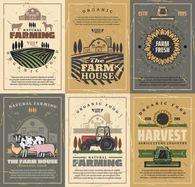 Farm animals, field, tractor and barn. Agriculture. Agriculture and farming vector design with farm field, tractor and barn, cow animals, vegetables and royalty free illustration