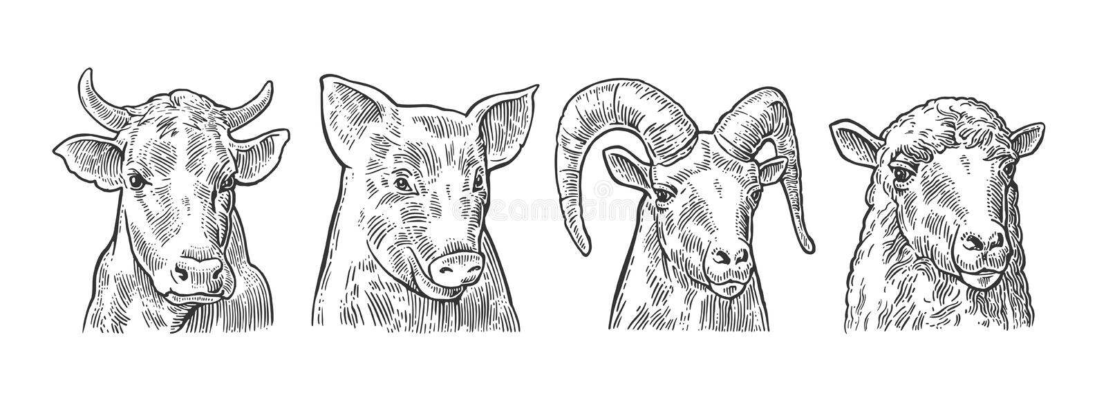 Farm animals icon set. Pig, cow, sheep and goat heads vector illustration