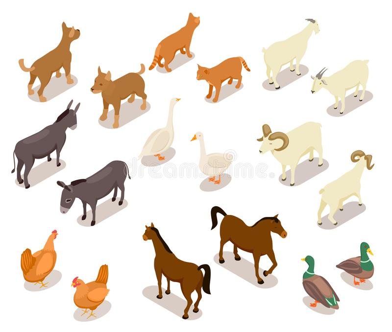 Farm animals isometric. Horse and dog, cat and goose, chicken and goat, ram and duck, donkey. Domestic animals vector 3d stock illustration
