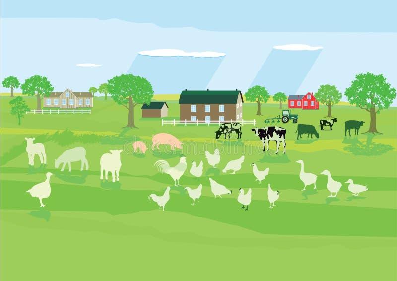 Farm animals on meadow vector illustration