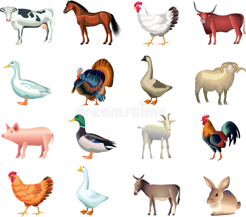 Farm animals photo realistic set royalty free illustration