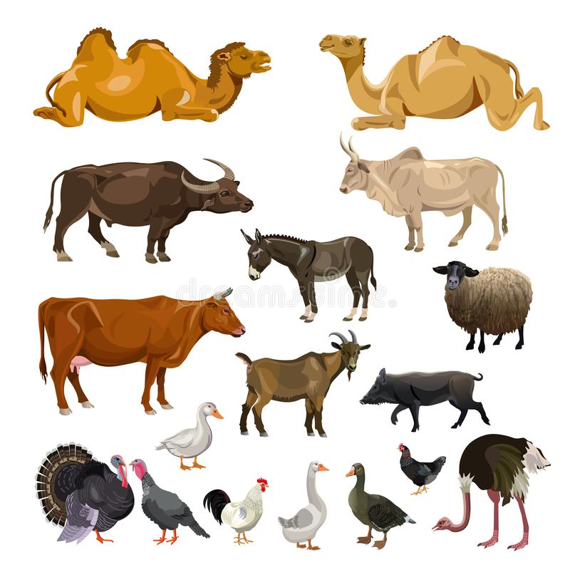 Farm animals set royalty free illustration