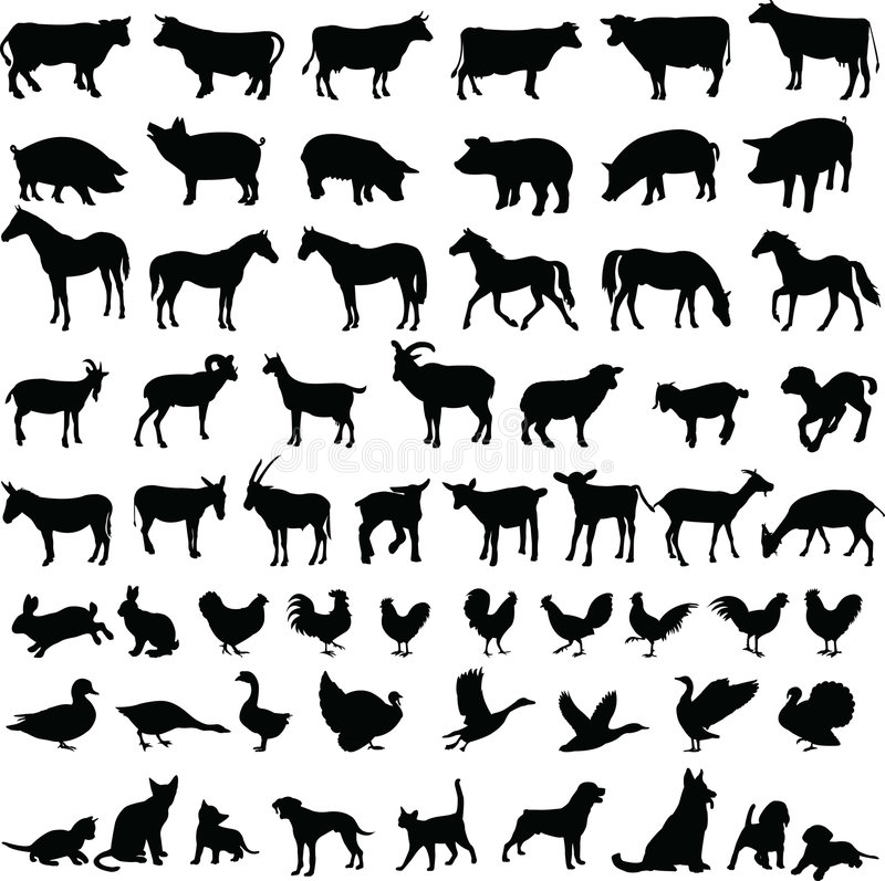Farm Animals - Vector Royalty Free Stock Images