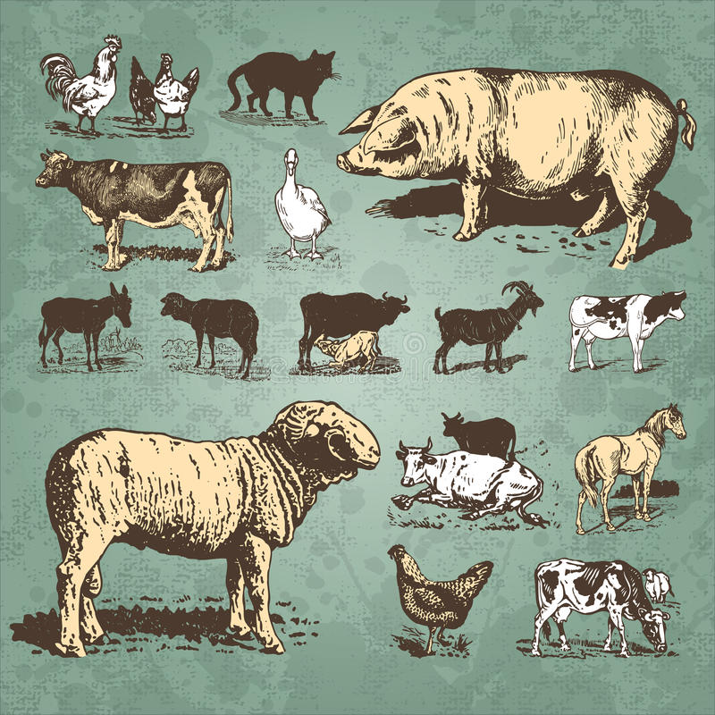 Free Farm Animals Vintage Set (vector) Royalty Free Stock Photos - 14334378