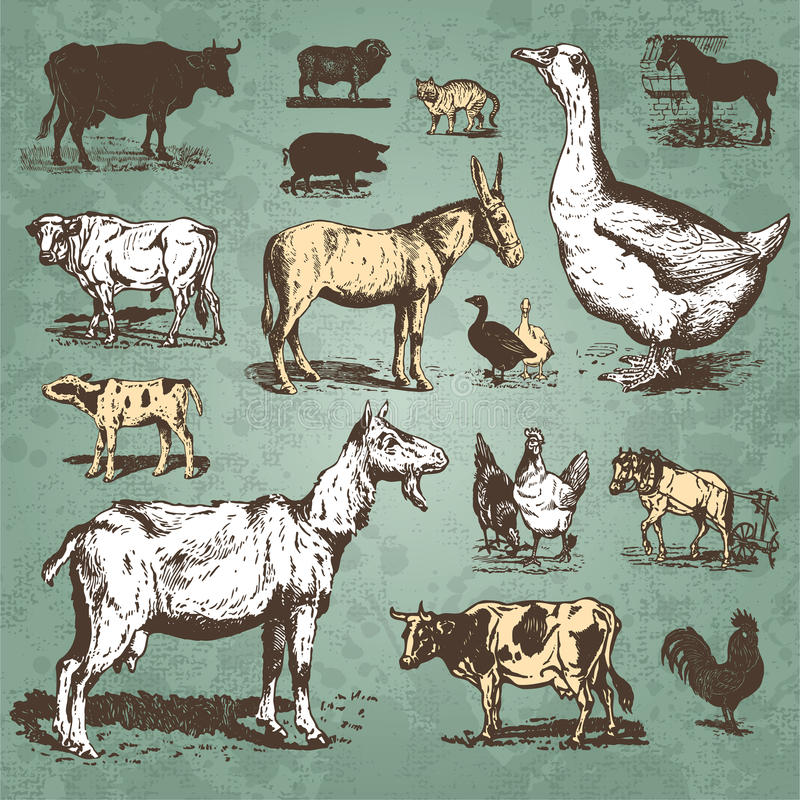 Free Farm Animals Vintage Set (vector) Stock Image - 14342421
