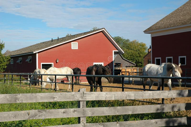 Farm area at the Henry Ford Museun with barn and horses royalty free stock photo