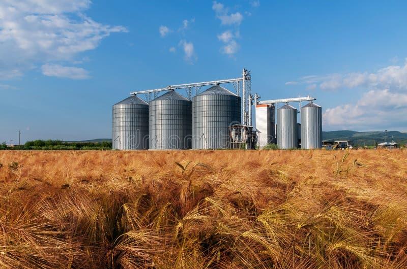 Farm, barley field with grain silos for agriculture stock photos