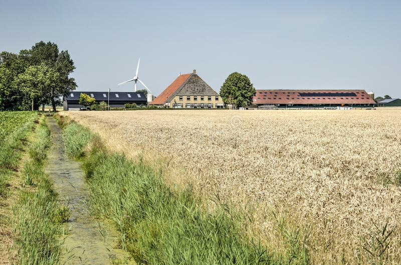Farm, barns, windmill and wheat field. Franeker, The Netherlands, July 27, 2019: Frisian landscape with traditional farmhouse, modern barns, a wind turbine, a stock images