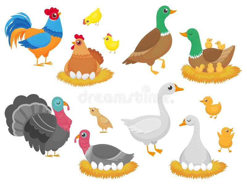 Farm birds. Poultry chicken, goose duck bird and turkey family nest isolated cartoon vector set stock illustration