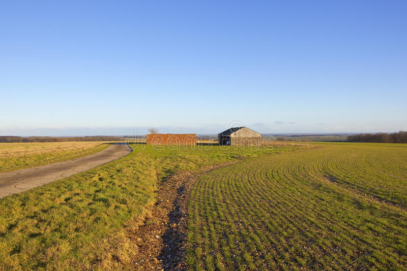 Farm buildings and wheat. Farm buildings on a hilltop in a yorkshire wolds landscape under a clear blue sky in winter royalty free stock photography