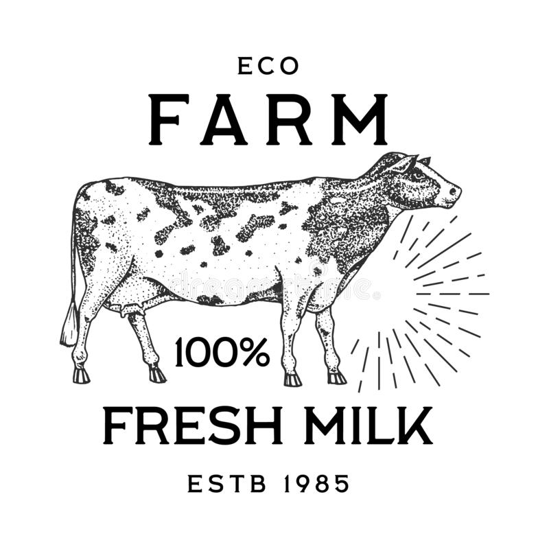 Farm cattle bull or cow. natural milk and meat. Different breeds of Farm domestic animal. Engraved hand drawn monochrome vector illustration