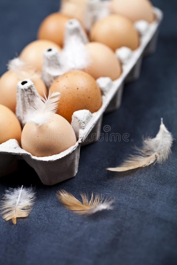 Farm chicken eggs in cardboard container and feathers stock photos