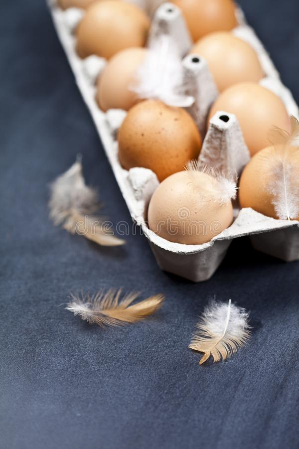 Farm chicken eggs in cardboard container and feathers royalty free stock photo