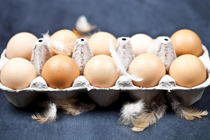 Farm chicken eggs in cardboard container and feathers stock photography