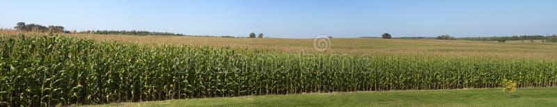 Download Farm Corn Field Panoramic Panorama Cornfield Stock Photo - Image of cornstalks, panoramic: 15880932