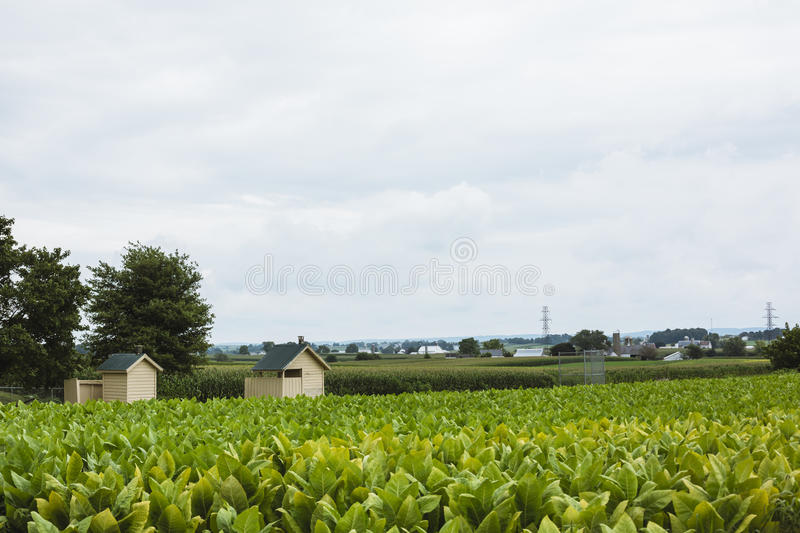Farm with crops in Amish country royalty free stock photography