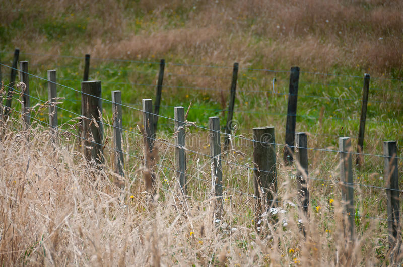 Farm fence with end of summer grasses. End of summer dried grasses in paddock with farm fence of batten and wire stock photo