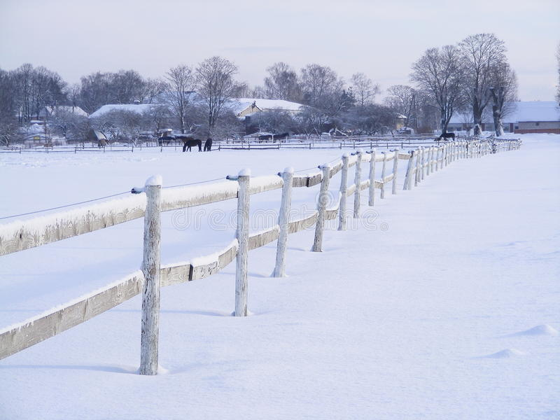 Download Farm fence in winter stock photo. Image of animal, grass - 19119572
