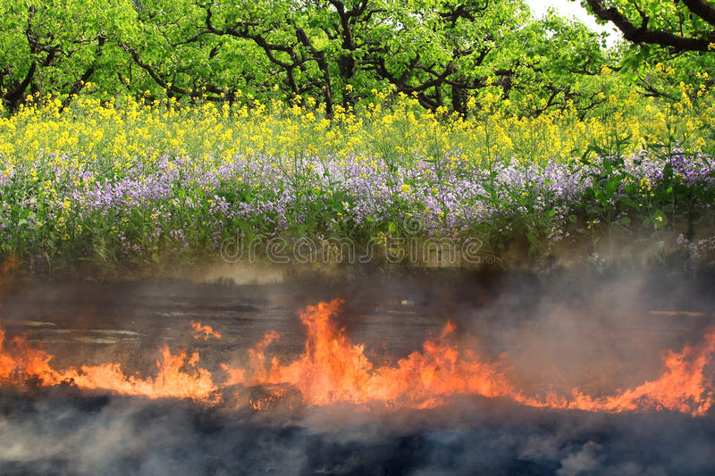 Life and death. Beautiful flower land transforms to fire dead land stock image