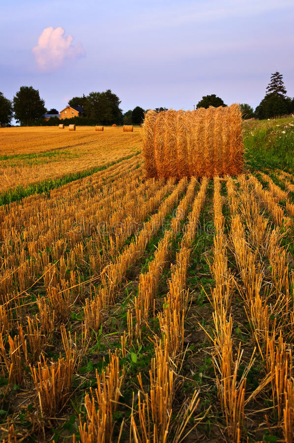 Farm field at dusk royalty free stock photography