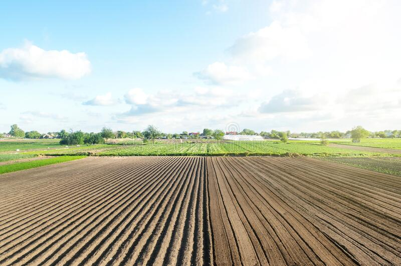 Farm field is half prepared for planting. Marking the field in rows. Agricultural technology and standardization. Organization and stock photography
