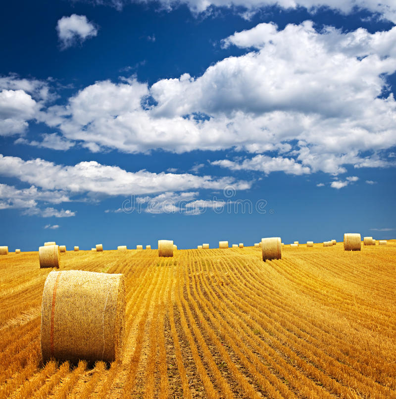 Farm field with hay bales stock photo