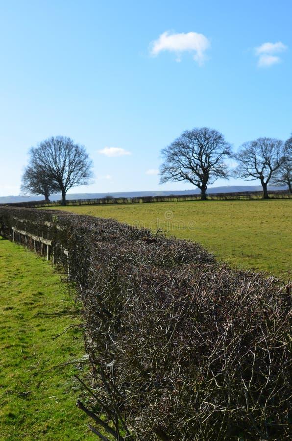 Farm field hedge in England. stock image