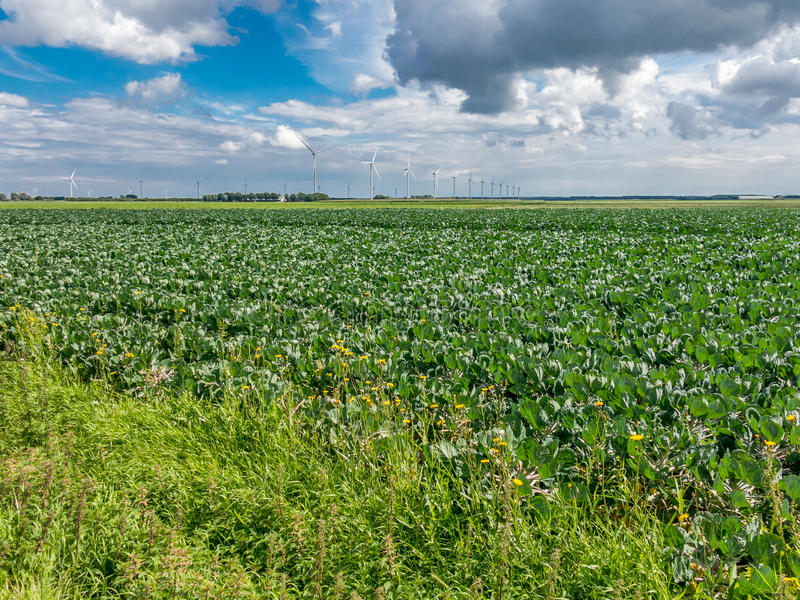 Farm field and wind turbines, Flevoland, Netherlands royalty free stock photography
