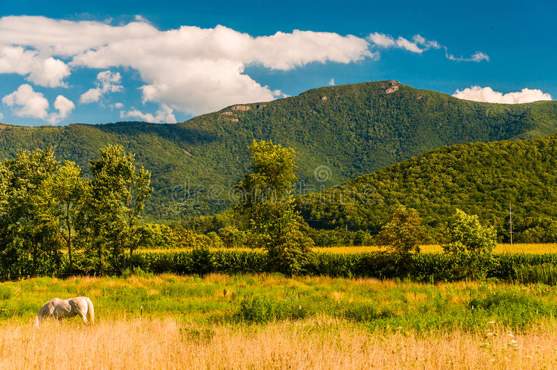 Farm fields and view of the Appalachians in the Shenandoah Valley, Virginia. Farm fields and view of the Appalachians in the Shenandoah Valley, Virginia stock images