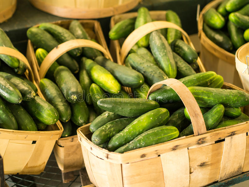 Farm Fresh Cucumbers stock photo
