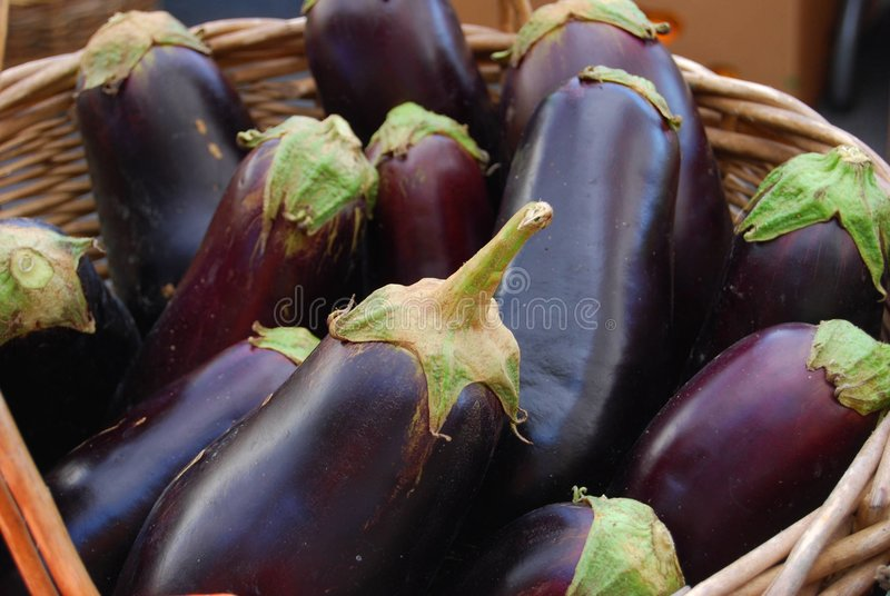 Farm Fresh Eggplants. Long prized for its deeply purple, glossy beauty as well as its unique taste and texture, eggplants are now available in markets throughout royalty free stock photo