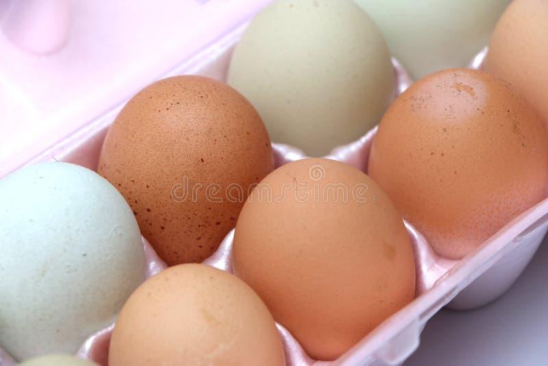 Farm Fresh Eggs royalty free stock photography