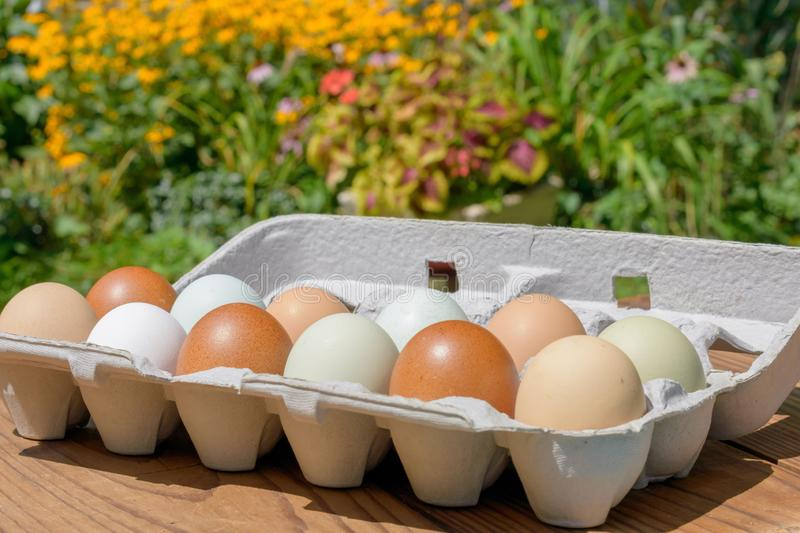 Farm fresh eggs in a variety of natural earth tone colors stock photo