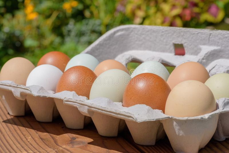 Farm fresh eggs in a variety of natural earth tone colors royalty free stock images