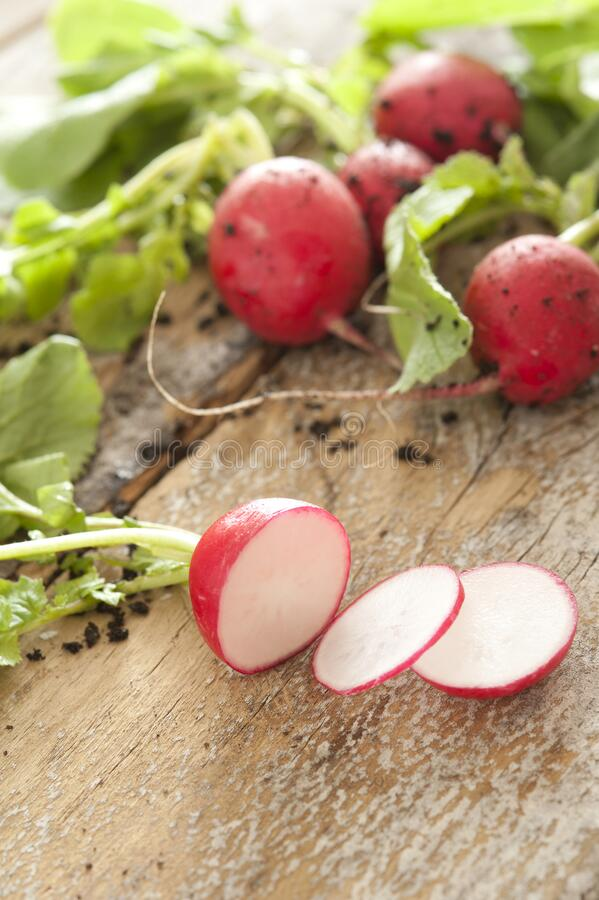 Farm fresh or homegrown radishes being sliced royalty free stock image