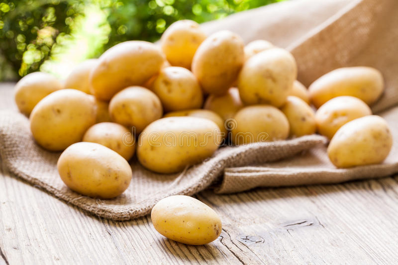 Farm fresh potatoes on a hessian sack. Farm fresh baby potatoes displayed on a hessian sack on a rustic wooden table at farmers market, a healthy nutritious root stock photography