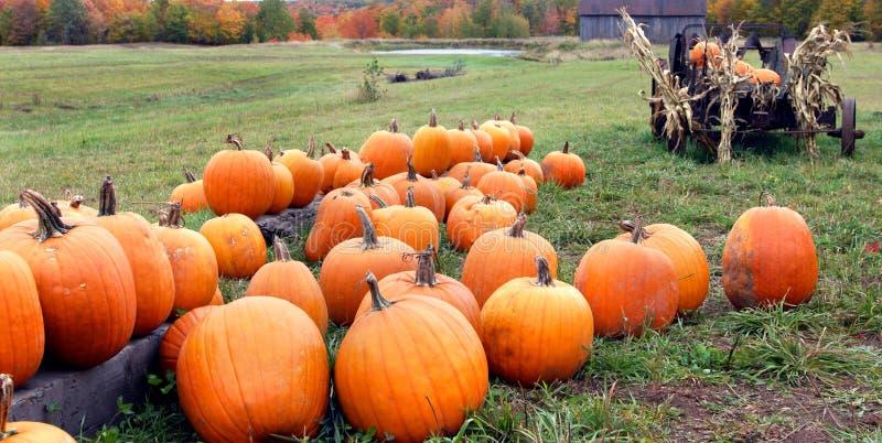 Farm fresh pumpkins stock image