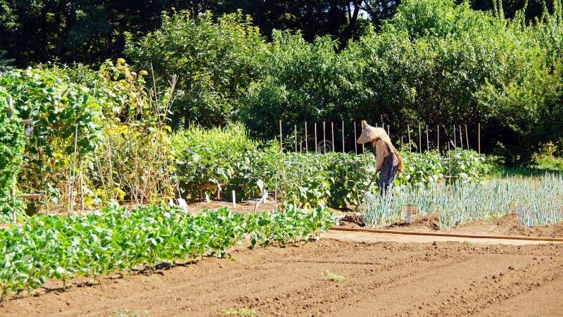 Farm garden in Boso no Mura, Narita. Old farm field of Boso no Mura in Narita, Japan royalty free stock photography